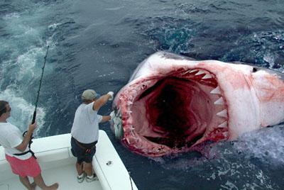 El tiburón mas grande de la historia