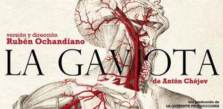 111102 La gaviota