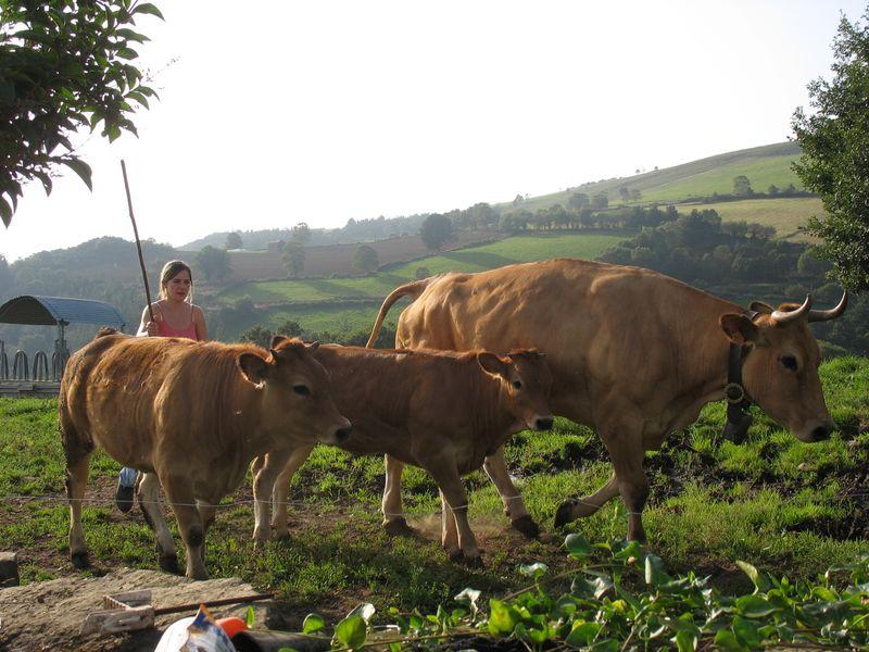 Verano 2011 Tamariu Asturias 009