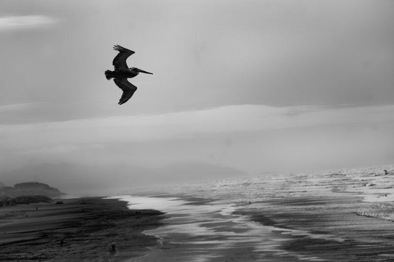Silueta de un albatros sobre Ocean Beach [Foto: Jose Ángel González]