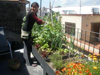 el sue o del mirlo vida verde huertos urbanos en terrazas - Huertos En Terrazas
