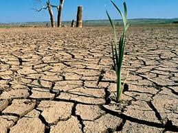 Rarámuri campo seco