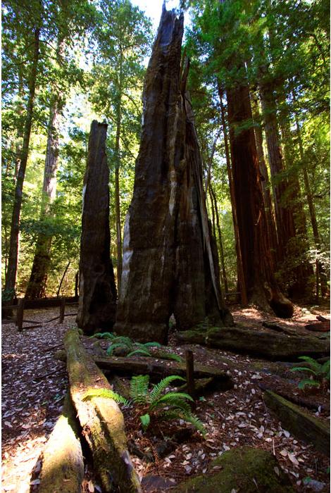 Parque Estatal de Portola Redwoods