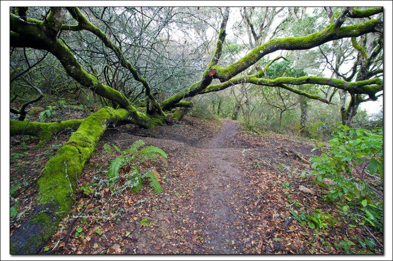 Parque estatal de Tomales Bay [Foto: © Oscar Vasquez for CA State Parks 2008]