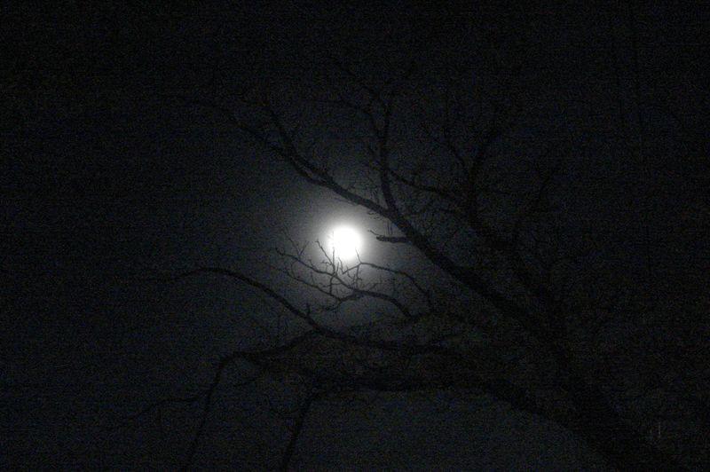 Luna en La Carlota (foto Fero Gigante)