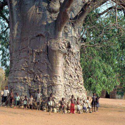 UBUNTU. Gran árbol rodeado de niños