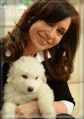 PP Con perro Simon_phixr