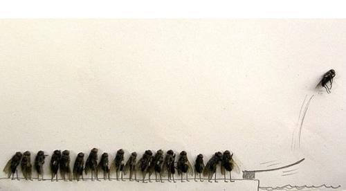 Diversion con moscas