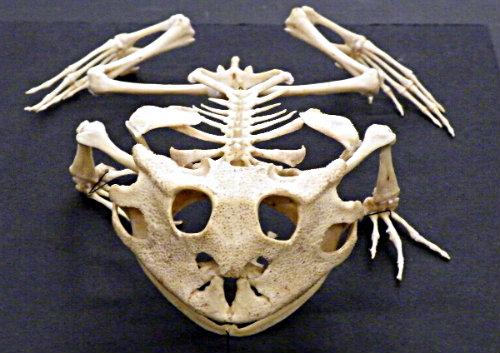 Anatomía: el retorno - Retiario
