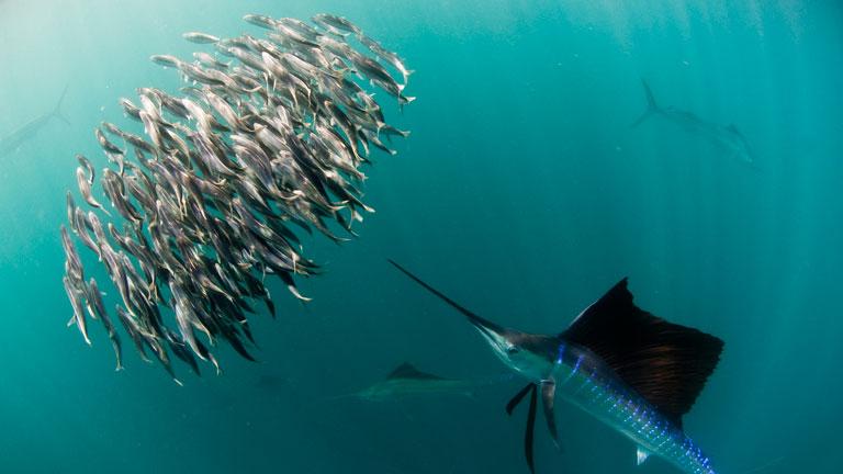Life-4-peces
