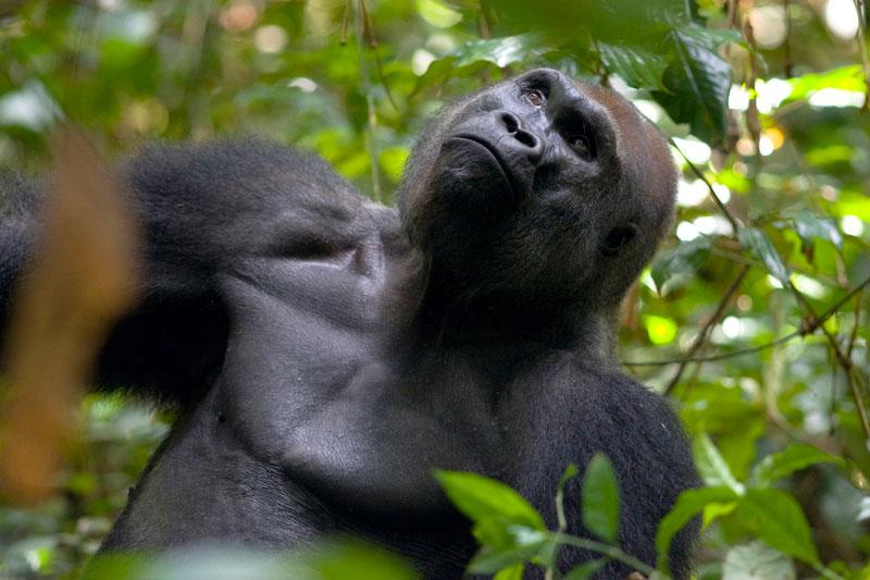 Life-primates-3