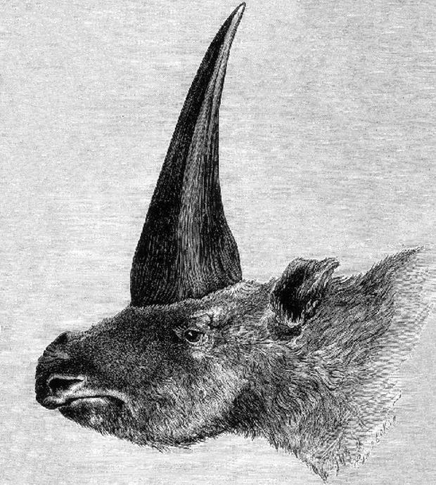 Elasmotherium_1878--620x690