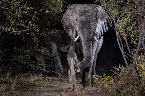 Elefante-Foto
