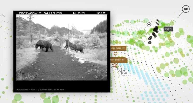Bear 71_3