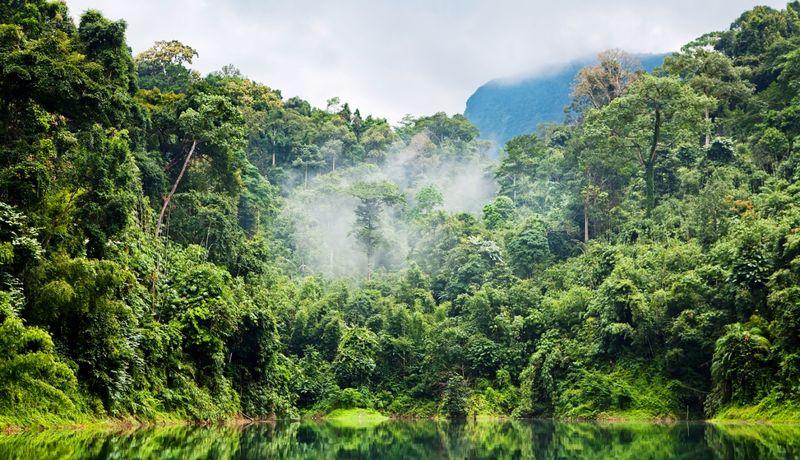 Selva-amazonia
