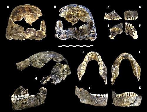 Homo_naledi_holotype