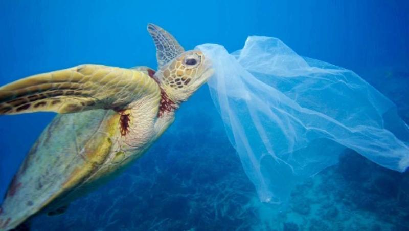 Plastics Greenpeace