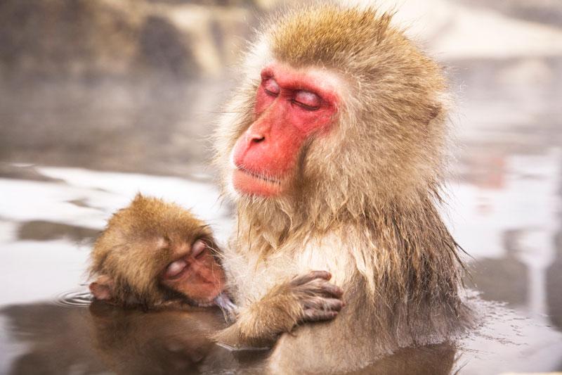 Life-primates-1
