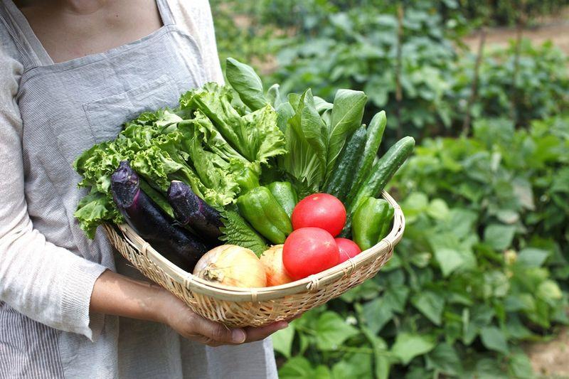 Vegetales_comida_verdura