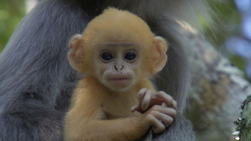 Life-primates-4