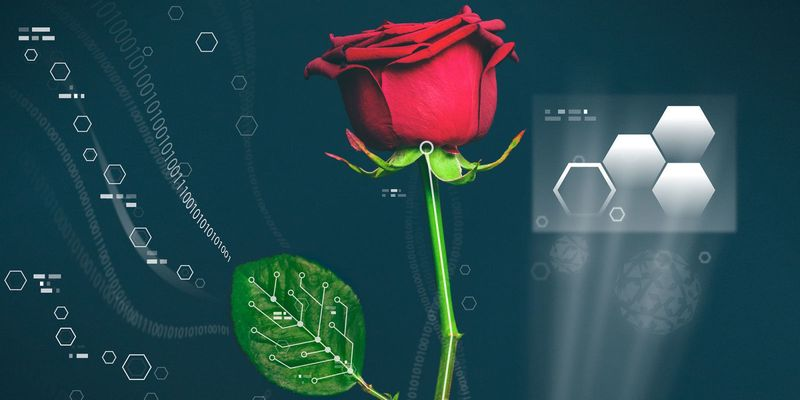 Wired-rose-plant