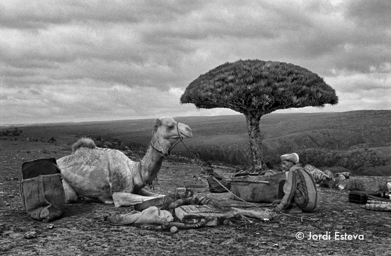 Socotra jordi esteva
