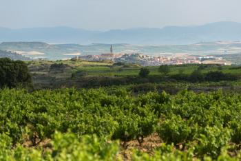 Viñedos de Labastida_Jordi Elias