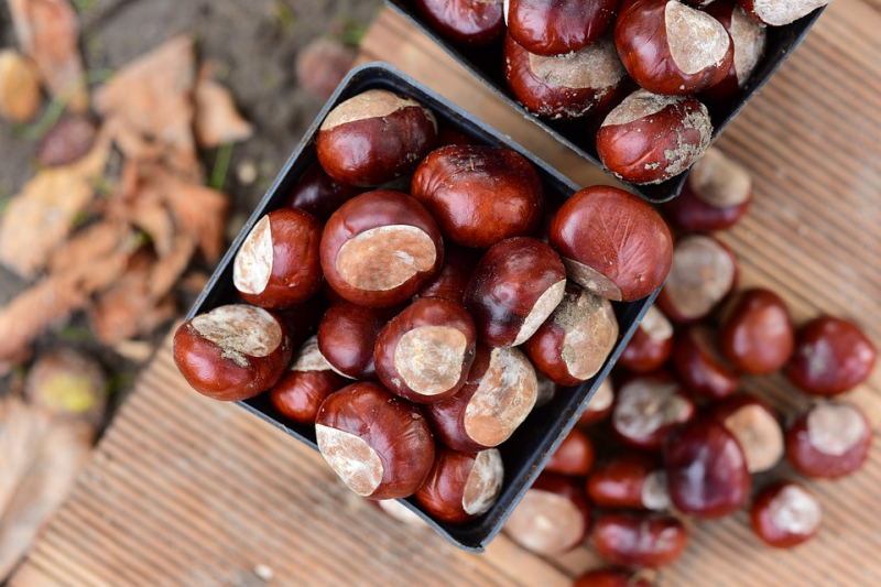 Chestnuts-3751766_960_720