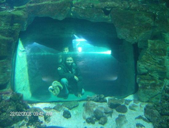 En-el-acuario-de-la-rochelle