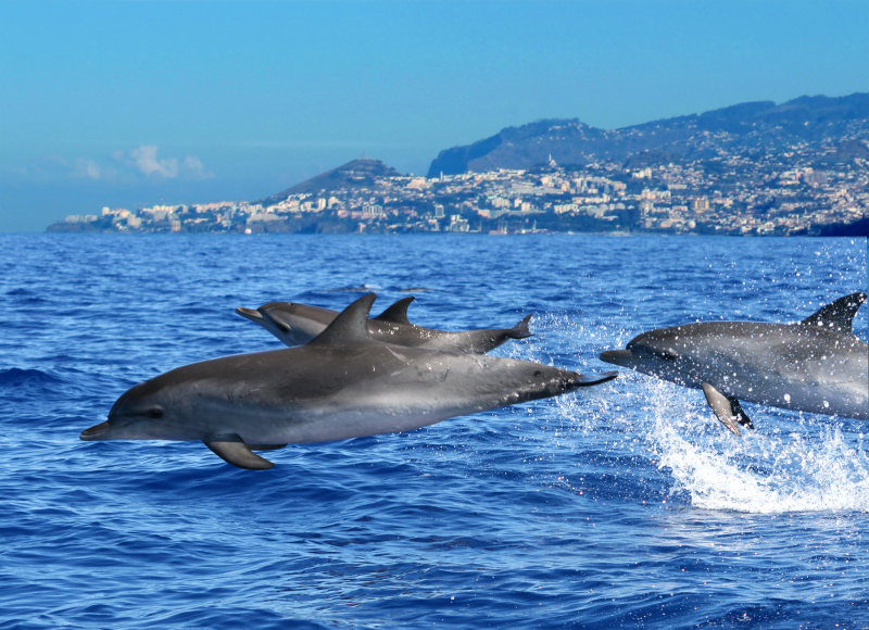 Dolphins and whales (3)