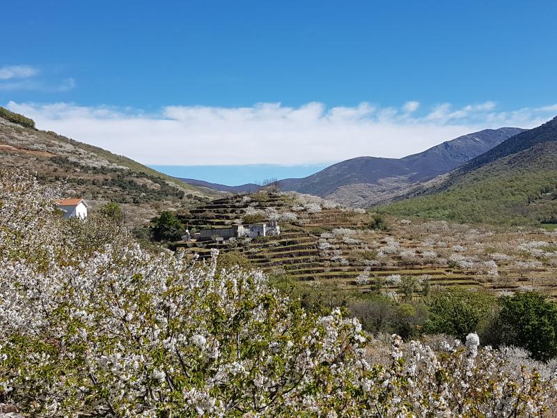15_Valle del Jerte_Jerte