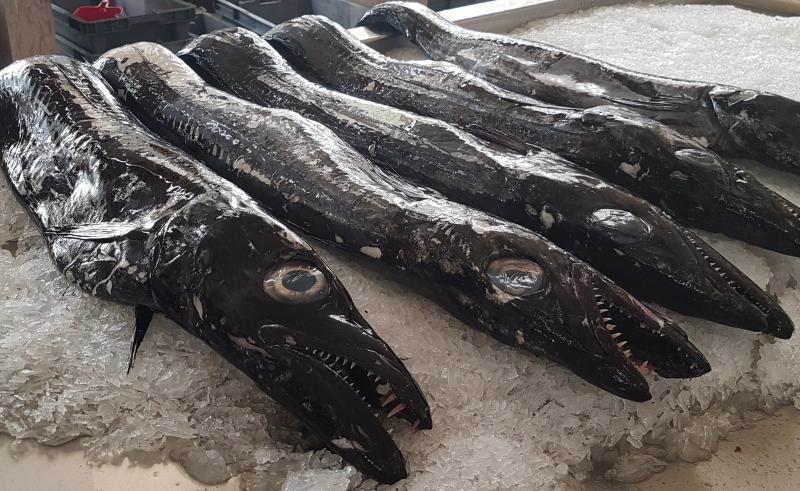 Pes espada negro Foto angelaGonzaloM