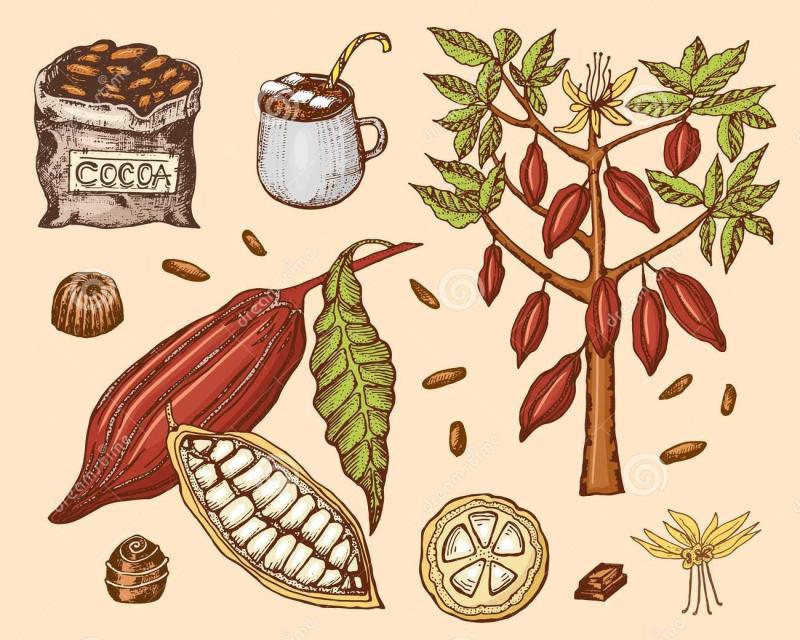 Granos-de-cacao-y-chocolate-caliente-producto-orgánico-natural-semillas-la-fruta-en-plantación-árbol-un-bolso-viejo-con-granja-119448856
