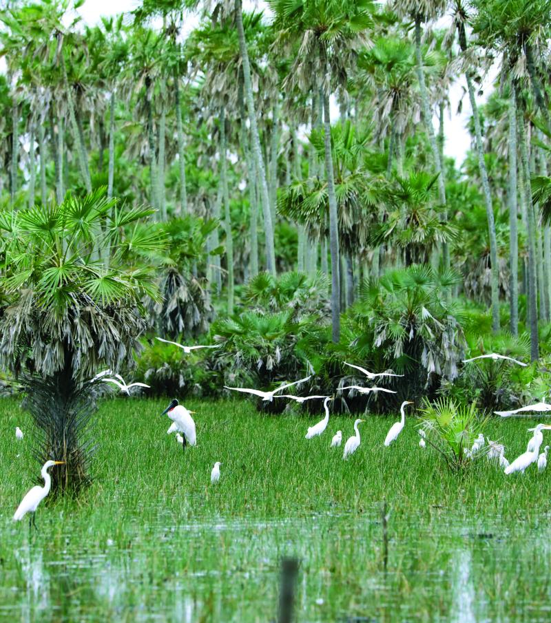 Chaco pantanal