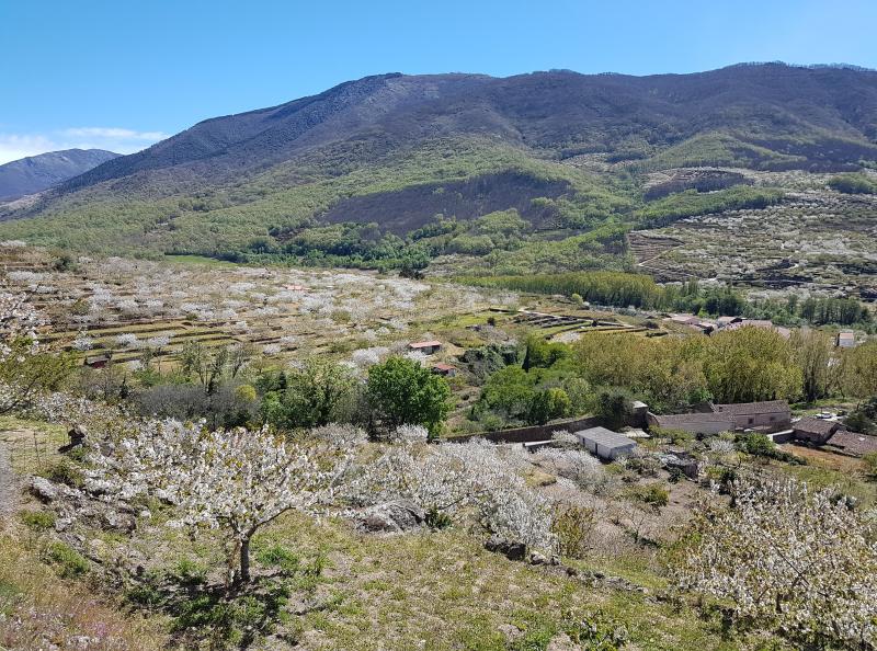 23_Valle del Jerte_Jerte