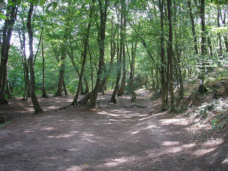 1280px-Forêt_de_brocéliande